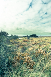 Goonhilly nature reserve