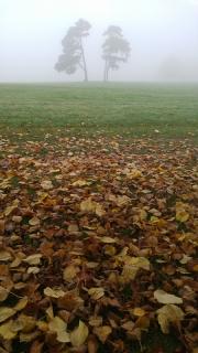 Fog and autumn leaves