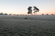 Frost and dog walker