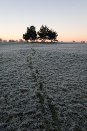 Frost footsteps