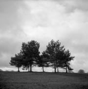 Seven Sisters, The Downs, Bristol