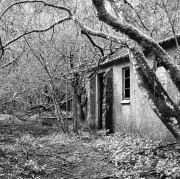 Trees and Derelict Building