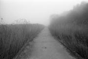 Foggy causeway