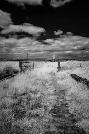 Grasses & sky (IR)