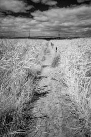 Path (IR)