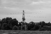Pylons, wires & birds