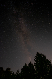 Milky Way over the trees