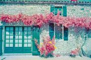 Gite courtyard, colour infra-red film