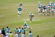Dolphins reception
