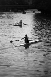 Silhouette Scullers