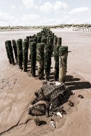 Groyne and lobster pot