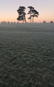Frosty Downs