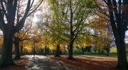 Autumn colours and shadows