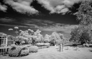 Art garden in infra-red