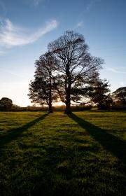 Evening tree shadow