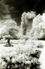 Barrington Court Gardens