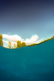 Trees from Underwater